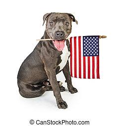 fosse, drapeau, terrier, américain, taureau