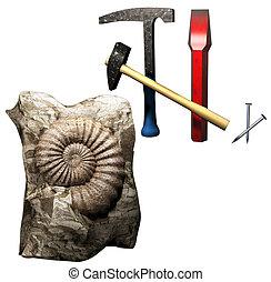 fossiel, ontdekking