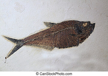 fossil fish texture