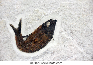 Fossil of a small fish.