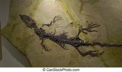 fossil remains of an ancient raptor in a piece of...