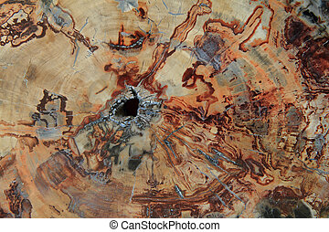 fossil wood texture