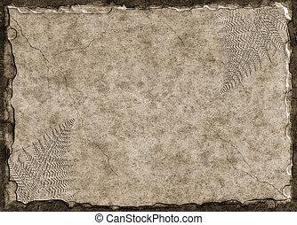 fossili, felce