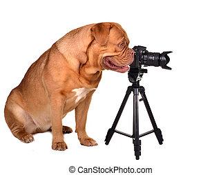 fotógrafo, cámara, foto