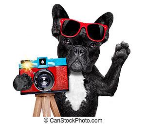 fotógrafo, cão, câmera