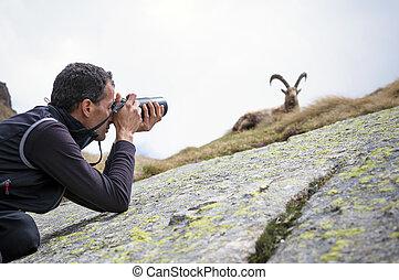 fotógrafo, fauna