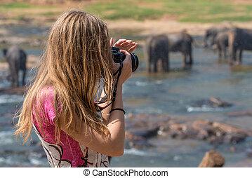 fotógrafo, fauna, femininas