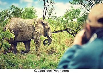 fotógrafo, levando, safari, quadros