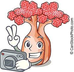 fotógrafo, mascote, planalto, árvores, garrafa