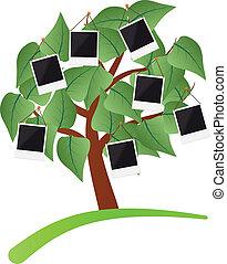 foto, árbol