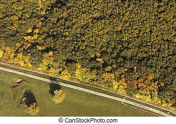 foto, aereo, foresta, strada
