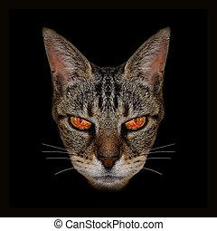 foto, arrabbiato, tecnica, gatto, digitale, manipolazione
