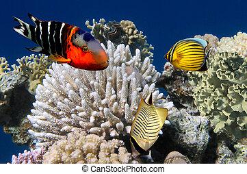 foto, av, a, korall, koloni, på, a, rev