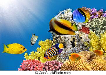 foto, av, a, korall, koloni, på, a, rev, topp