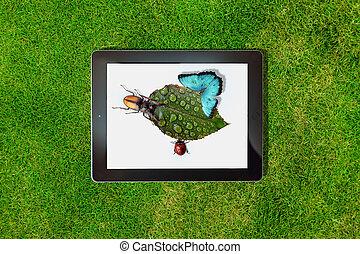 foto, blad, tablet, wei, dauw, ligt, groene