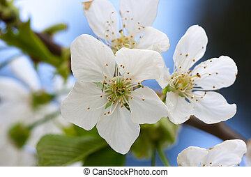 foto, bloem boeket, vibrant, op, kleuren, afsluiten, bloemen
