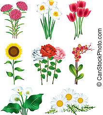 foto, blomningen, vektor, sätta, realistisk