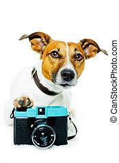 foto, cámara, perro