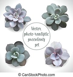 foto, conjunto, realista, succulents