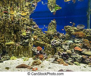 foto, coral, colonia