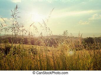 foto, de, campos, com, milho