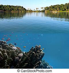 foto, de, un, coral, colonia, en, un, arrecife, cima, chang, isla, tailandia