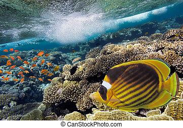 foto, de, un, coral, colonia, en, un, arrecife, cima