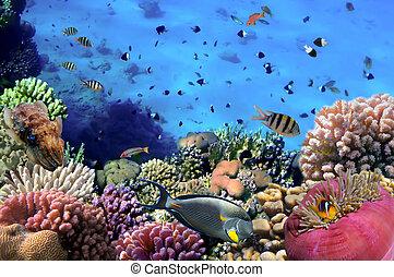 foto, de, un, coral, colonia