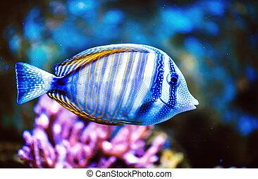 foto, de, un, pez tropical, en, un, coral