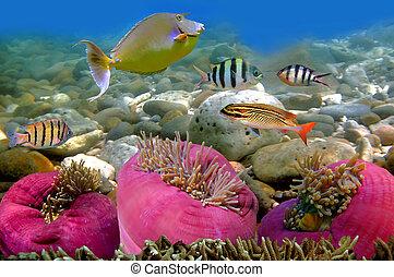foto, di, uno, corallo, colonia