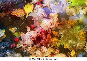 foto, hojas, roble, multicolor, otoño, macro