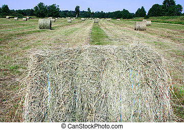 Foto of haystack on field at summer