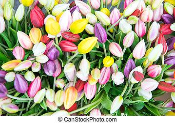 foto, per, fälschung, plastik, tulpen, auf, der, markt, in, amsterdam