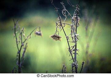 foto, planta, primer plano, muerto