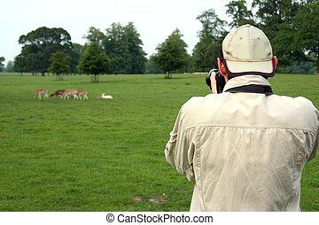 foto, presa, parco, deers, uomo