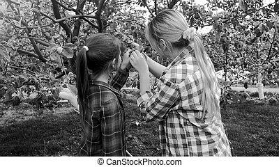 foto preta branca, de, mulher jovem, trabalhando, em, pomar, com, dela, filha
