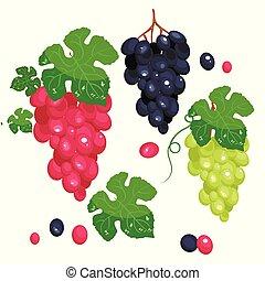foto, realista, uva, set., lleno, editable, aislado, en, white., uva verde, uva roja, negro, grape.