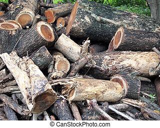 foto, tocón, árbol
