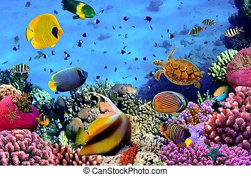 foto, van, een, coraal, kolonie