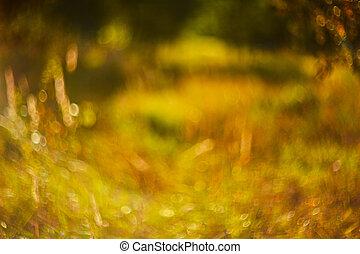 foto, von, verwischt, field., fokus, sommer, herbst, sunset.