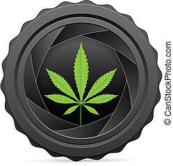 fotoapperat, verschluß, mit, marijuana blatt