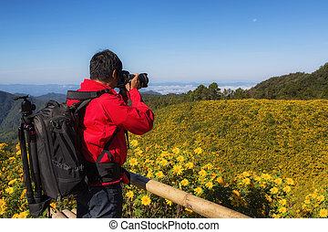 fotograf, machen foto, für, der, straße, zu, der, feld, von, gelber , mexikanisch, sonnenblume, unkraut, auf, der, berg