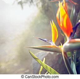 fotografi, aflægger, farverig, flora, i, den, tropisk, have