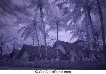 fotografia, bungalows, palmas, infravermelho