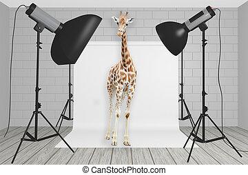 fotografia, girafa, estúdio, plataformas, centro