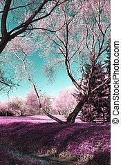 fotografia, infravermelho