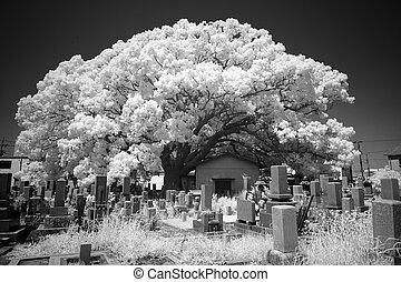 fotografia monocromática, infravermelho