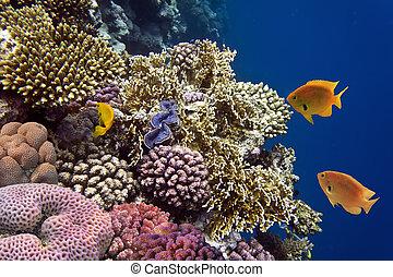 fotografia, od, niejaki, koral, kolonia