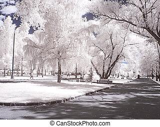 fotografia, park., moscow., ruela, infravermelho