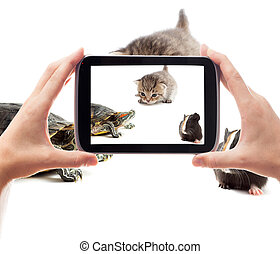fotografia, smartphone, wziąć, pieszczochy